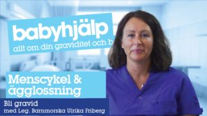Menscykel ägglossning video